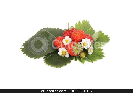fresh strawberries stock photo, fresh red strawberries on the white background by Jiri Vaclavek