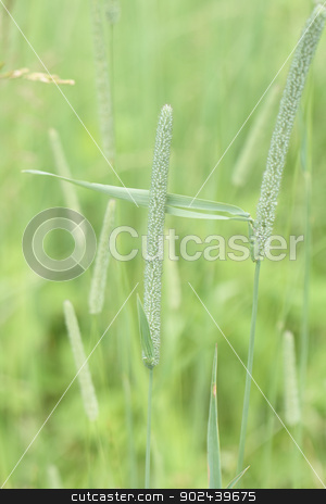 green background stock photo, very fresh green grass background in the spring by Jiri Vaclavek