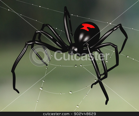 Black Widow Spider stock photo, Black widow spider perched upon a dew sodden web by Paul Fleet