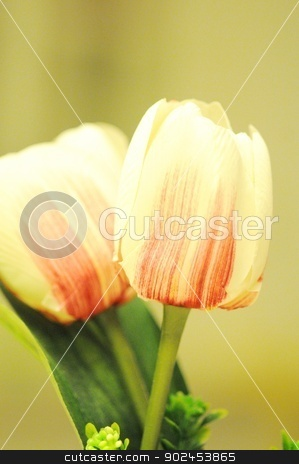 tulips stock photo, tulips by SUAT DURSUN