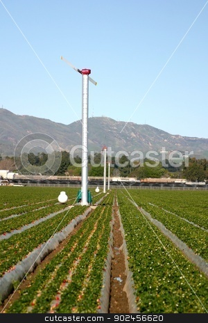Agricultural Windmills stock photo, Agricultural windmills for frost protection in a strawberry field. by Henrik Lehnerer