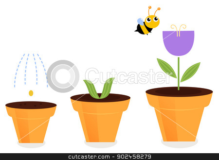 Flower in pots growth stages isolated on white ( tulip ) stock vector clipart, Purple spring flower growth. Vector cartoon Illustration by BEEANDGLOW