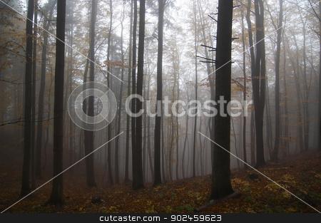 misty stock photo, Shot of the misty forest by Siloto
