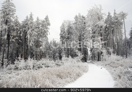 winter landscape stock photo, Shot of the snowy covered landscape with forest raod by Siloto