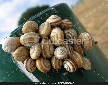 Land snails stock photo, snails from the family helicidae resting on a green stake by Andreas Altenburger