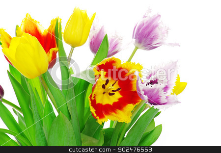 tulips on white stock photo, bouquet of the tulips on white background by Vitaliy Pakhnyushchyy