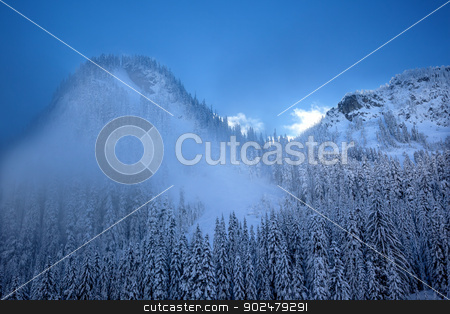 Fog Snow Covered Mountain Evergreen Trees at Snoqualme Pass Wash stock photo, Fog Snow Covered Trees on Snow Mountain at Snoqualme Pass Washington. by William Perry