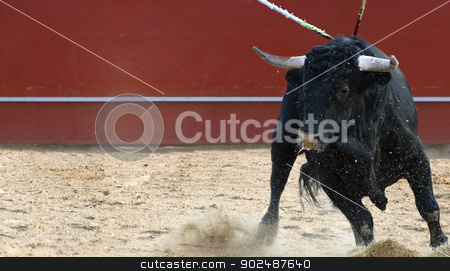 Fighting bull picture from Spain. Black bull stock photo, Fighting bull picture from Spain. Black bull by Fernando Cortes