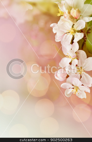 Cherry frame stock photo, Cherry blossom frame with plenty of copyspace. Love message or greetings.  by Piccia Neri