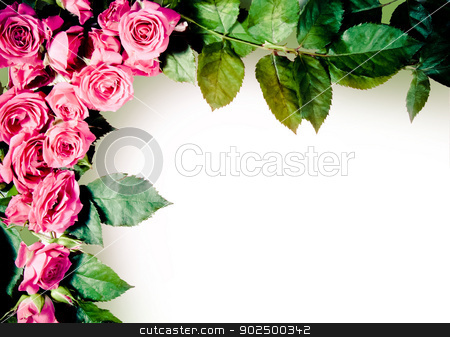 Roses frame stock photo, A frame of beautiful pink roses and rose leaves on pure white background. by Piccia Neri