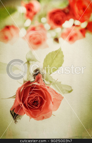 Vintage rose stock photo, Vintage rose on watercolor background. Distressed look for a retro feel. Focus on bud in the foreground. by Piccia Neri