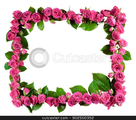Roses frame, isolated stock photo, Frame made of beautiful pink roses and blossoms, isolated on white. Great as a greetings card, for a love message, for a wedding and so on. by Piccia Neri