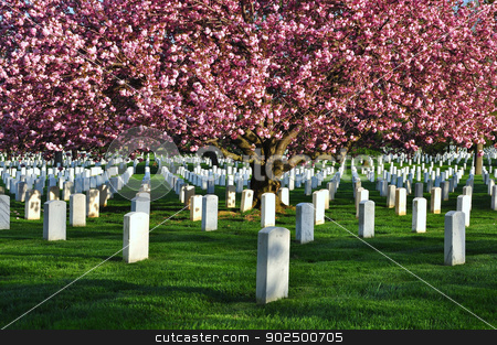 Arlington National Cemetery  stock photo, Arlington National Cemetery near to Washington DC, in Spring  by Hang Dinh