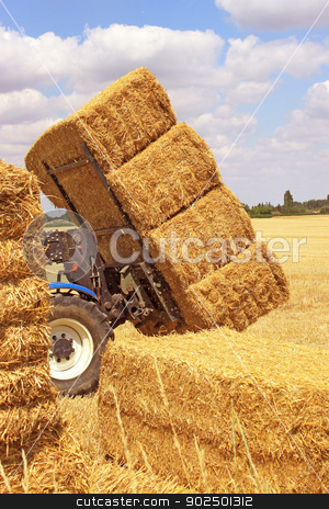haystack stock photo, many haystacks piled on a truck in a field of wheat by Cochonneau