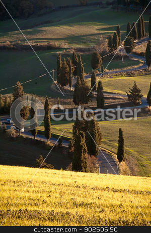 Winding road in Tuscany stock photo, Winding road lined by cypress trees in the heart of Tuscany, near San Quirico d'Orcia, Siena. by Piccia Neri
