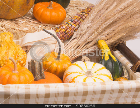 Harvest Time stock photo, Basket with pumkins, gourds, acorn squash,  Indian Corn, and wheat stalks.  Isolated on white background with light shadow by Surf City Images
