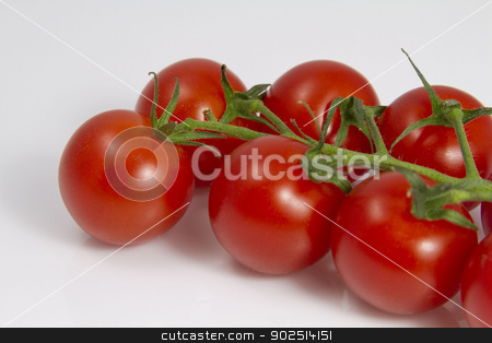 Tomatoes on the Vine stock photo, Tomatoes on the Vine by Goldcoinz