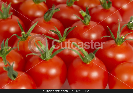 Tomatoes  stock photo, Bunch of Tomatoes  by Goldcoinz