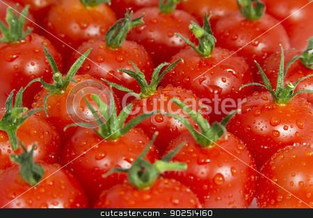 Tomatoes  stock photo, Bunch of Tomatoes with water droplets by Goldcoinz