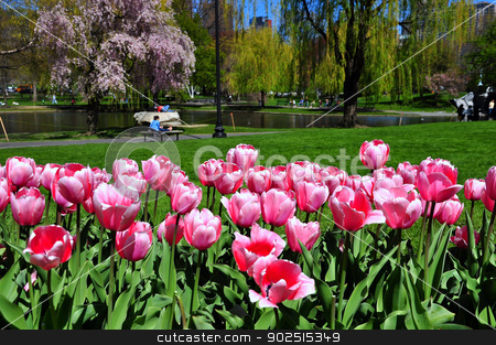 Boston city from tulips garden stock photo, Taken in Boston Public Garden, Boston, USA by Hang Dinh