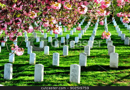 Arlington National Cemetery near to Washington DC, in Spring stock photo,  by Hang Dinh