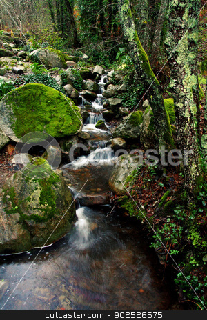 Slice of nature freshness stock photo, View of a stream of fresh mountain water on a lush green forest. by Mauro Rodrigues