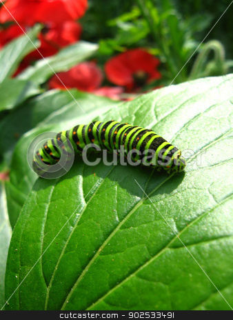 Caterpillar of the butterfly machaon on green leaf stock photo, image of caterpillar of the butterfly  machaon on green leaf by Alexander Matvienko