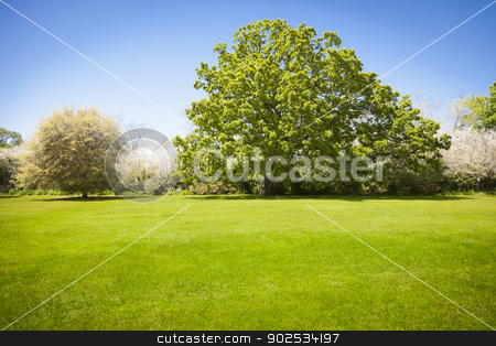 Beautiful Green Grass Field with Blossoming Trees stock photo, Beautiful Green Grass Field with Large Majestic Blossoming Trees. by Andy Dean