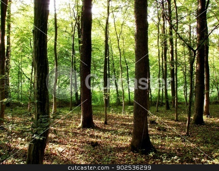 Forest stock photo, forest by budastock