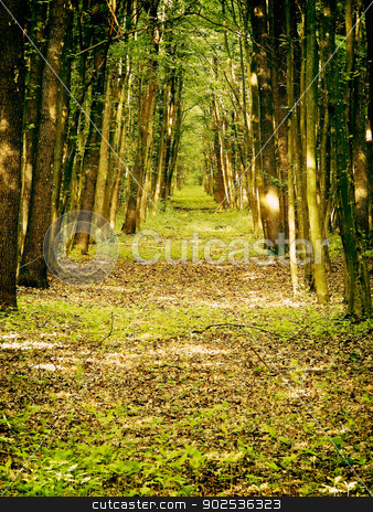 Spiritual forest path stock photo, forest path by budastock