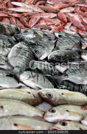 Bream pile stock photo, View of several bream family fishes at the market. by Mauro Rodrigues