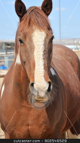 Horse on ranch. stock photo, Portrait of a horse on the ranch. by OSCAR Williams