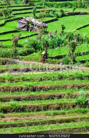 reen rice field terrace stock photo, Green rice field terrace with small temporary buildings, Bali, Indonesia by Iryna Rasko