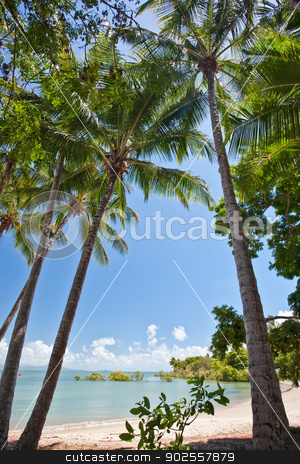 Coconut palms on a tropical beach stock photo, View between coconut palms of a sunny tropical beach with golden sand and a calm blue ocean by JRstock