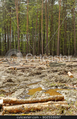 Deforestation and logging stock photo, industrial deforestation and logging by Jozsef Demeter