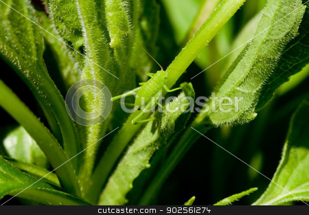 Blending In stock photo, A small grasshopper blends in with it's environment. by Joe Tabb