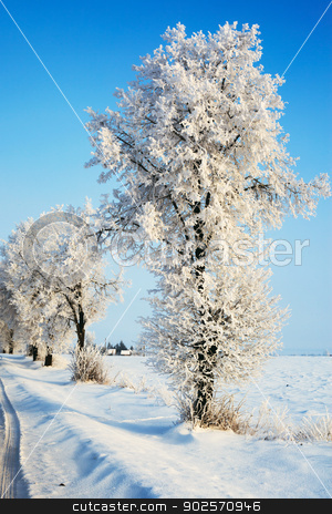 Winter road stock photo, Country winter road leading into a winter forest by Rimantas Abromas