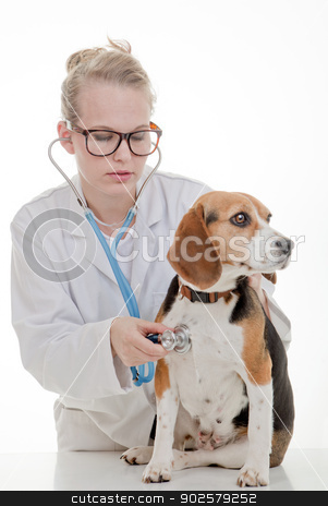 veterinarian examining dog stock photo, veterinarian or vet examining pet dog by mandygodbehear