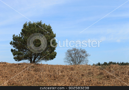 Green tree in countryside stock photo, Green trees on moors in countryside with blue sky and cloudscape background. by Martin Crowdy