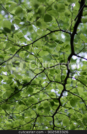 Leafy green background stock photo, Abstract leafy green background with bokeh effect. by Martin Crowdy