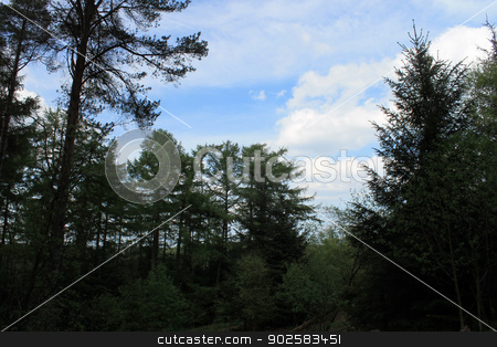 Silhouetted forest and blue sky stock photo, Silhouetted trees in forest with blue sky and cloudscape background. by Martin Crowdy