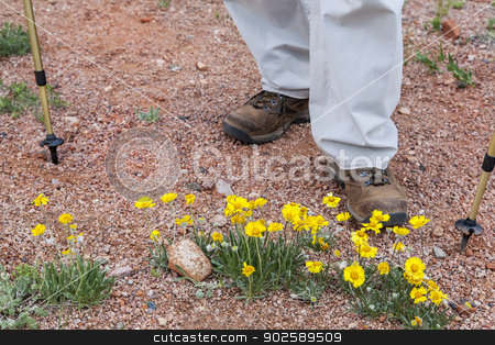 hiker and desert wildflowers stock photo, hiker feet, trekking poles and  yellow desert wildflowers, Colorado by Marek Uliasz