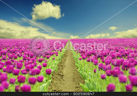 Spring tulips stock photo, Beautiful Spring tulips - floral background by klenova