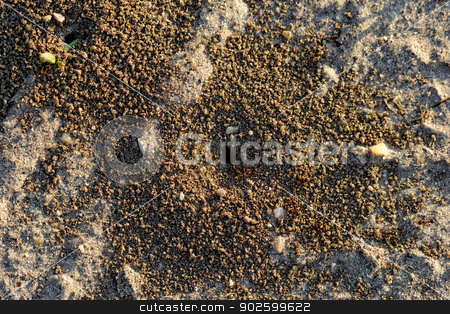 ants and ant hill stock photo, ants and ant hill by Jozsef Demeter
