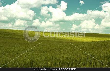 grain field stock photo, new landscape image with green field and cloudy sky by metrue