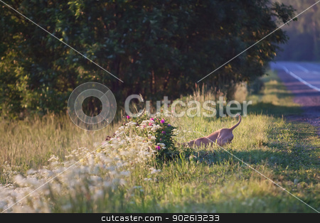 Red dog stock photo, Funny image of red dog in the grass by Yulia Chupina