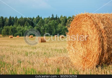 Straw Bales stock photo, Harvested straw bales in a sunny day by Kamila Starzycka