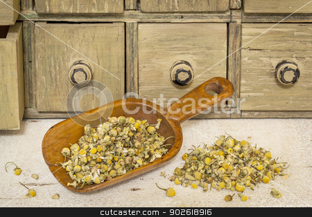 organic chamomile herbal tea stock photo, organic chamomile herbal tea - rustic wooden scoop and a pile on rough white painted barn wood with a primitive apothecary drawer cabinet by Marek Uliasz