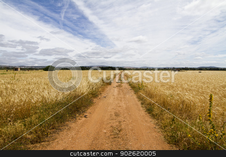 Dirt road on cereal meadow stock photo, View of a long dirt road in the middle of cultivated cereal.  by Mauro Rodrigues