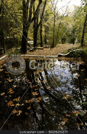 beautiful park with pond stock photo, View of some detail of the Caldas de Monchique park on Portugal. by Mauro Rodrigues